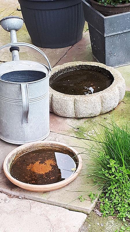 Wasserstellen für Bienen und Vögel