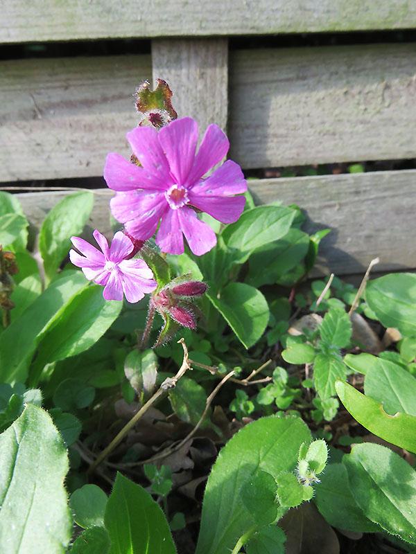 Blume in Nahaufnahme