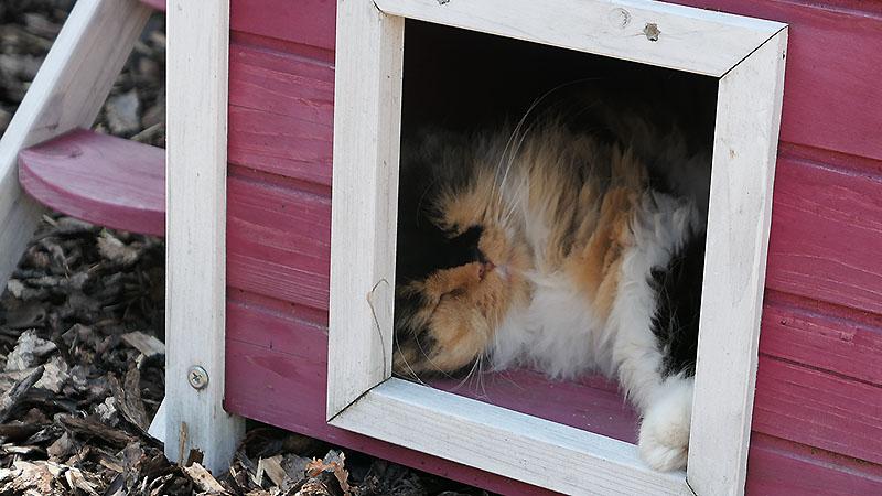 Auch die Katze hat ihre schattenspendende 'Wohnung' (angenommen)