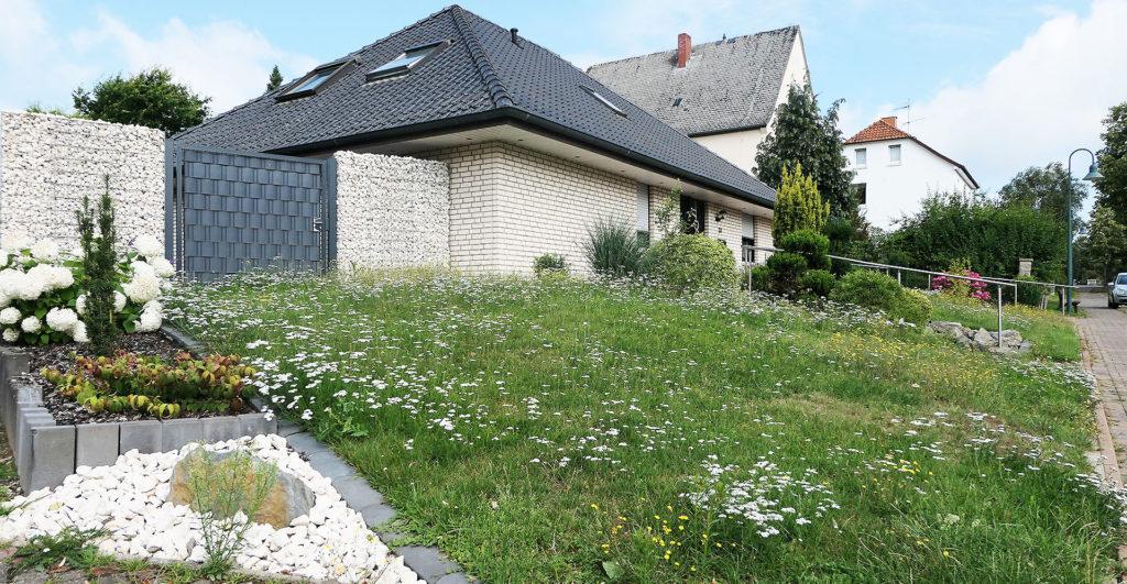 Vorgarten - Auf dem Rasen ist die Schafgarbe vorherrschend.