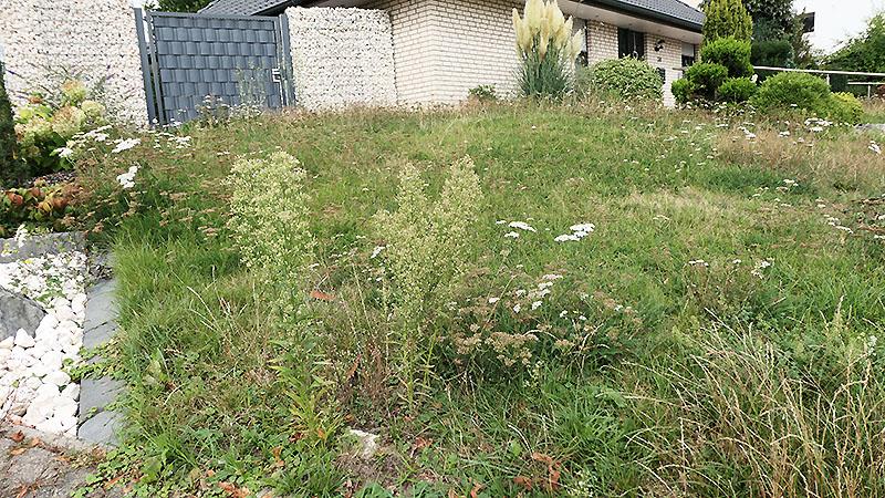 Vorgarten mit Wildblumen bei seitlichem Blick