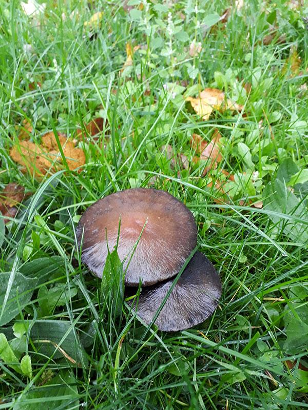 Pilze auf der Wildblumenwiese