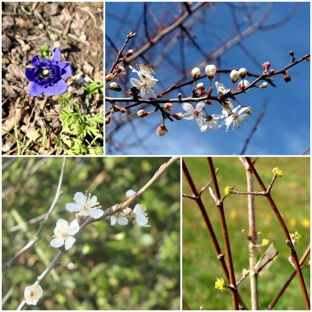 Blumige Eindrücke im Frühjahr