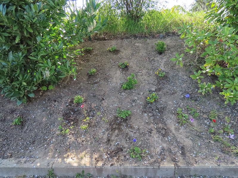 Die Böschung wurde mit immergrünnen Bodendeckern bepflanzt.