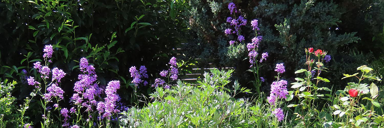 Nachtviolen, Rosen und andere Gewächse