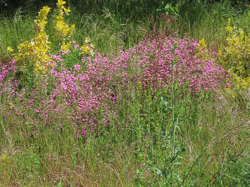 Pflanzen für 'Steinbepflanzung'