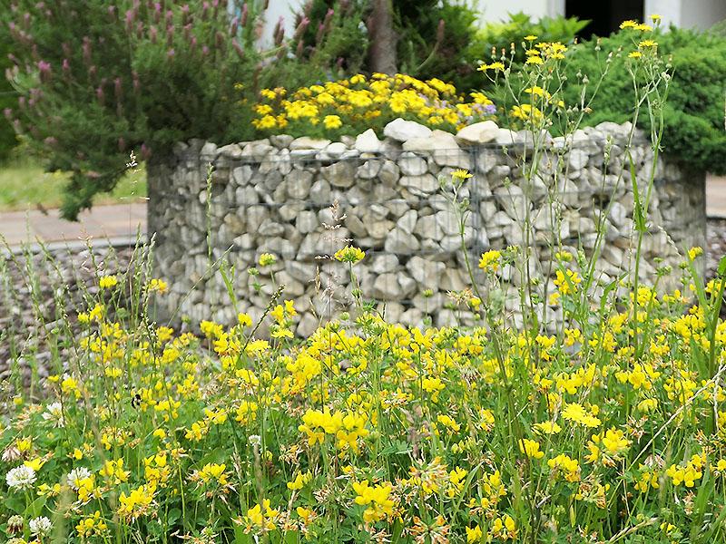 Fingerkraut vor dem Blumenrondell