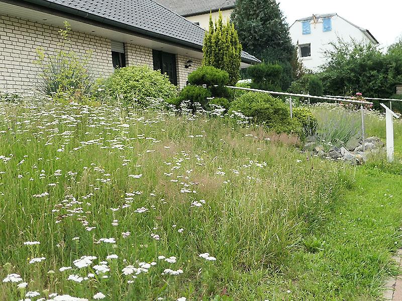Naturnaher Vorgarten am 19.07.2020