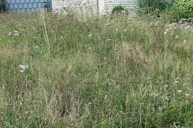 Wann mäht man eine Wildblumenwiese?