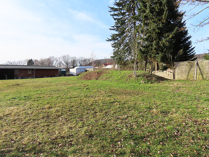 Wildblumenwiese am 20.02.2021