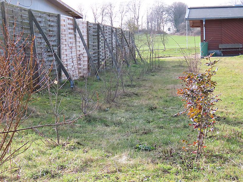 Bäume / Sträucher auf unserer Wildblumenwiese am 20.02.2021