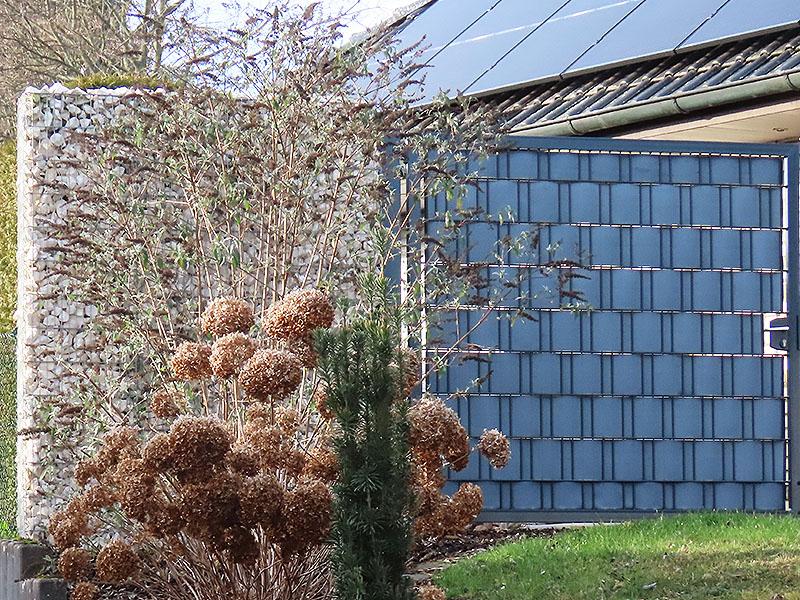 Verblühter Schmetterlingsflieder (hinten), verblühte Hortensie (vorne)
