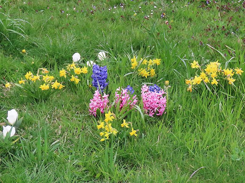 Blumen im Frühjahr aus Blumenzwiebeln