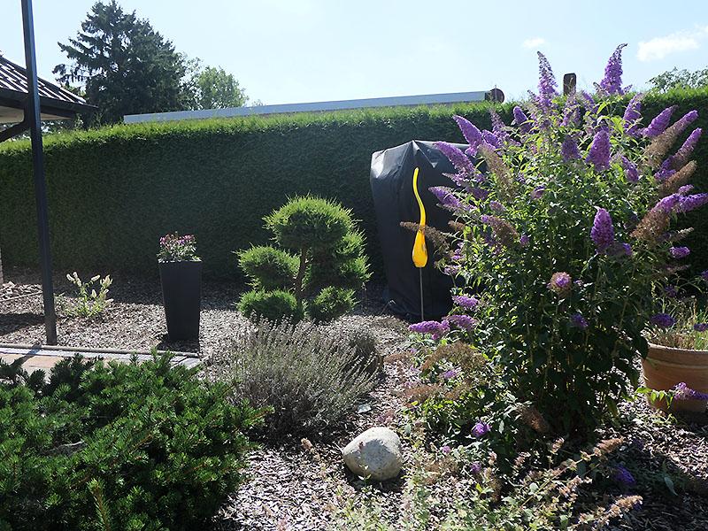 U.a. kleine Schmetterlingsflieder (violett vorne, klein und weiß hinten links)